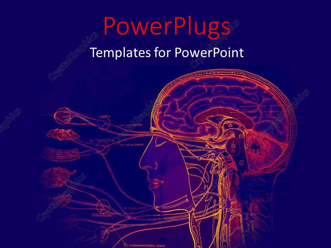 PowerPoint Template: Depiction of the human anatomy with brain scan ...