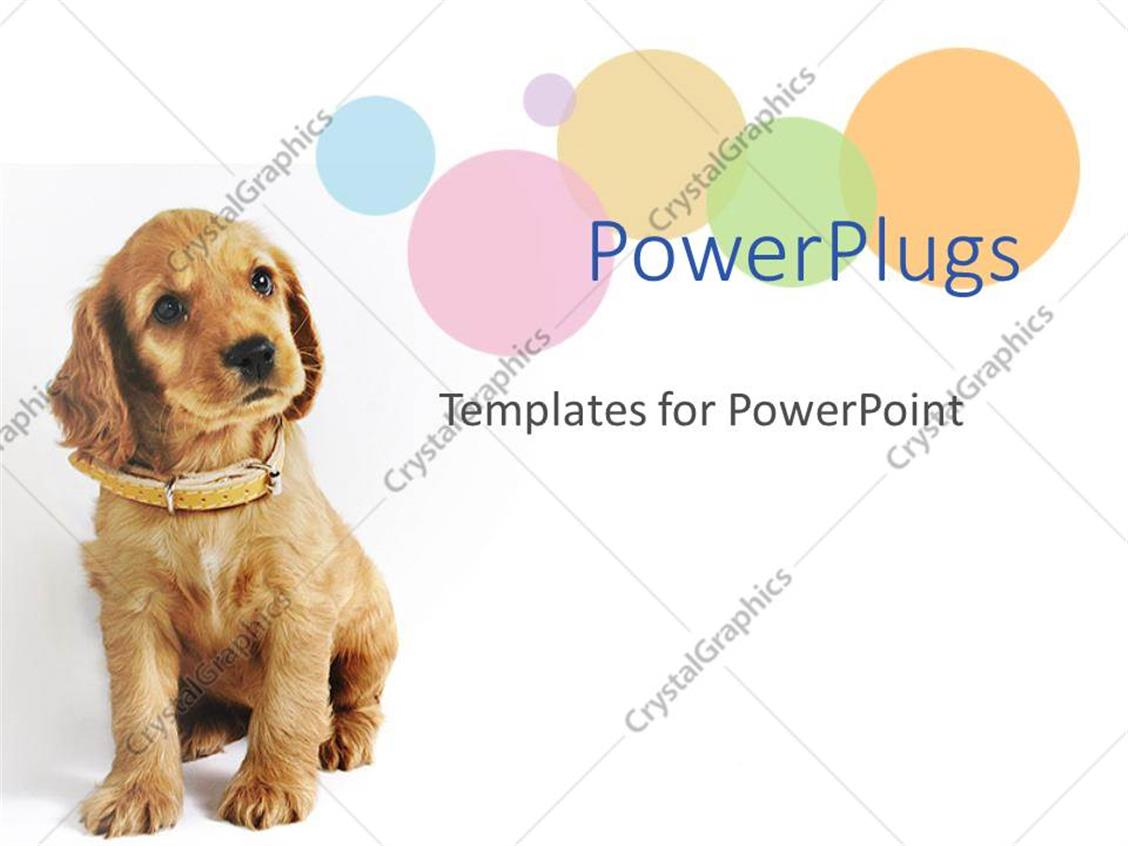 Powerpoint Template A Dog Wearig An Brown Belt Sitting In Front Of