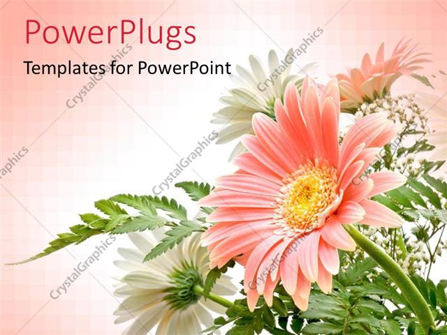 PowerPoint Template: elegant composition of Gerbera flowers with ...