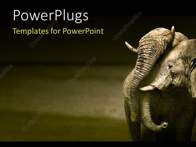 Powerpoint Template An Elephant With A Grayish Background 11077