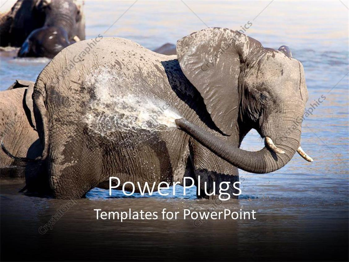 PowerPoint Template Displaying an Elephant Washing Himself with Water from the Lake