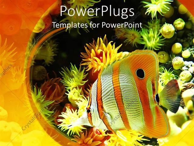Powerpoint Template An Exotic Fish Is Swimming In An Aquarium Which Has Low Depth 11371