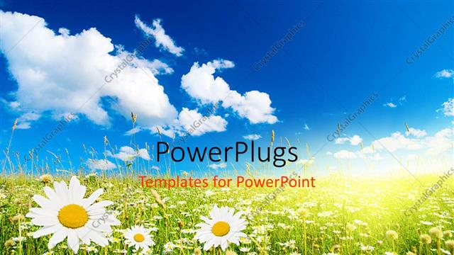 PowerPoint Template Displaying Field of Daisies and Perfect Sky