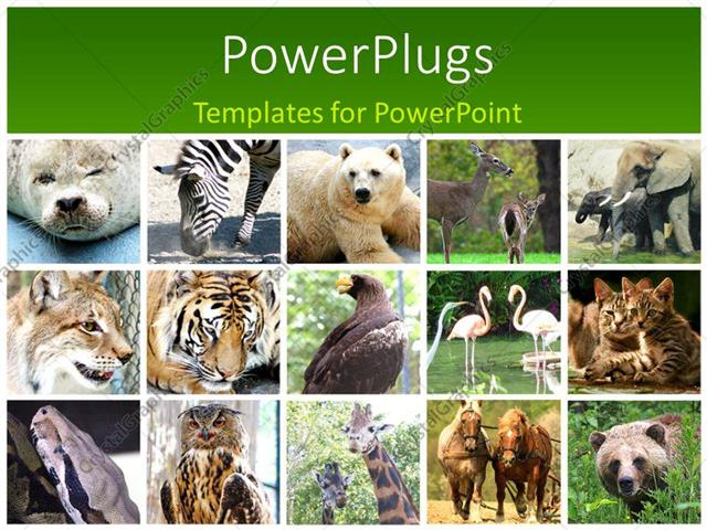Powerpoint template fifteen tiles with different animals in twos powerpoint template displaying fifteen tiles with different animals in twos and threes toneelgroepblik Gallery