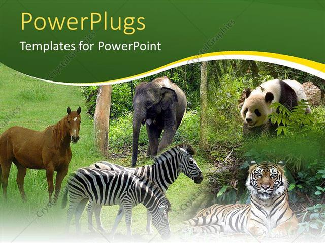 Powerpoint Template Five Tiles Showing Different Animals In