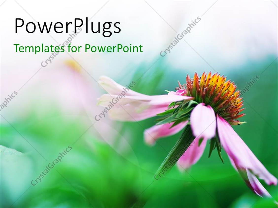 PowerPoint Template Displaying a Flower with Greenish Background and Place for Text