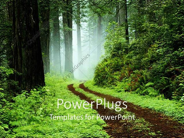 powerpoint template fresh morning in between green forest with so