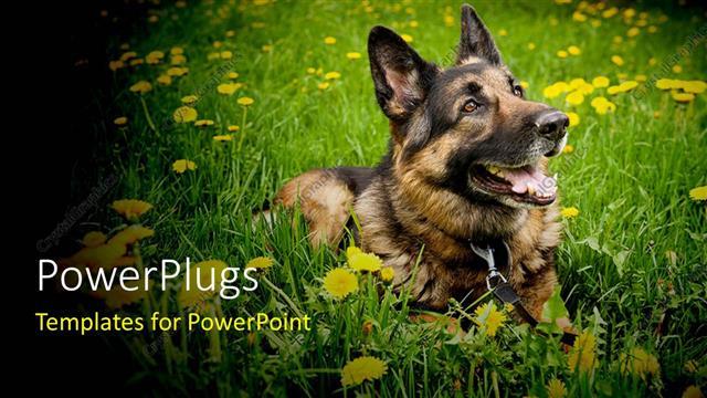 powerpoint template a dog enjoying itself in the grass 13490