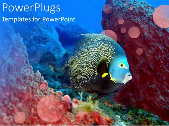 powerpoint template glowing fish swimming over coral reef in water