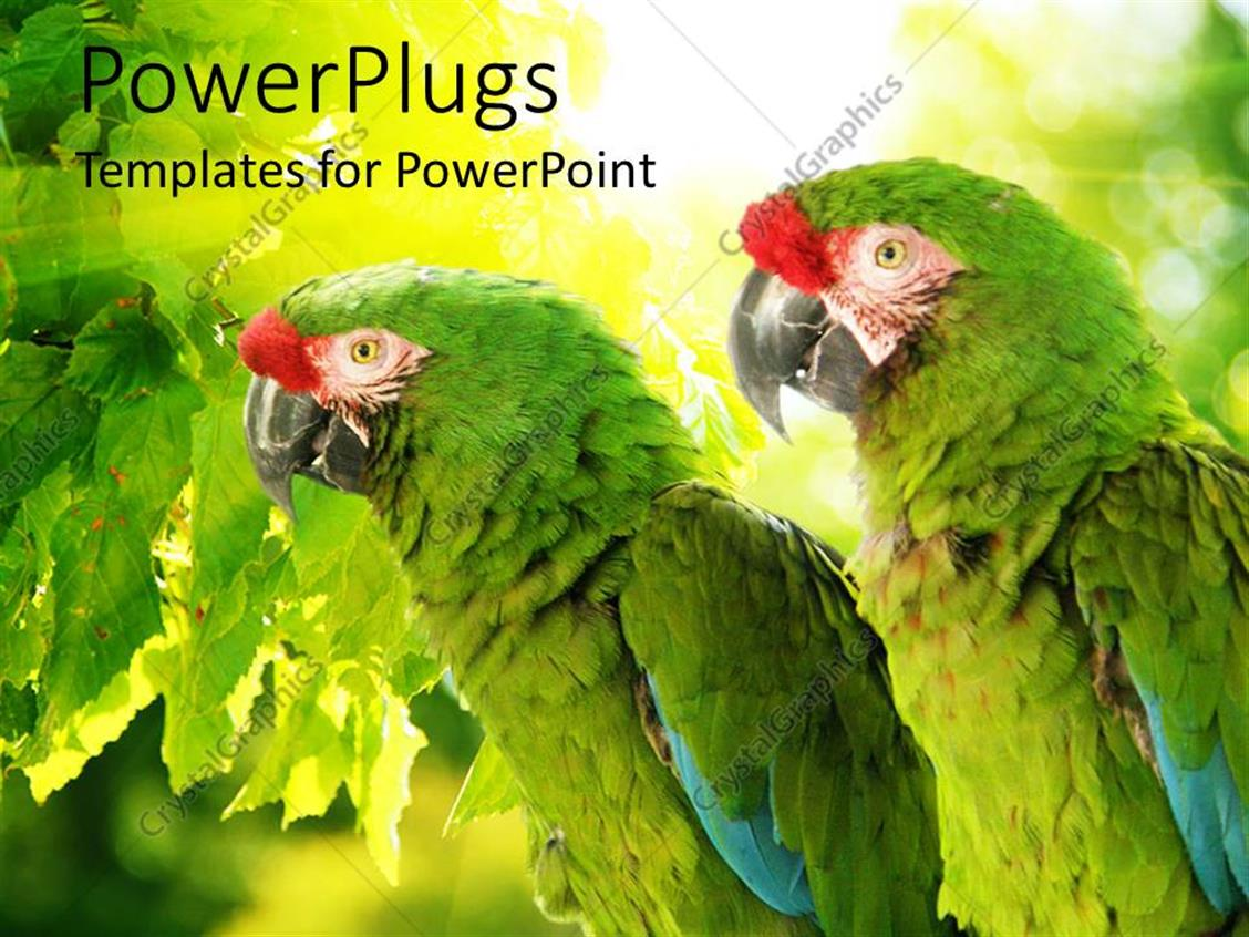 Powerpoint Template Green Tropical Parrots Perch On Tree In Forest