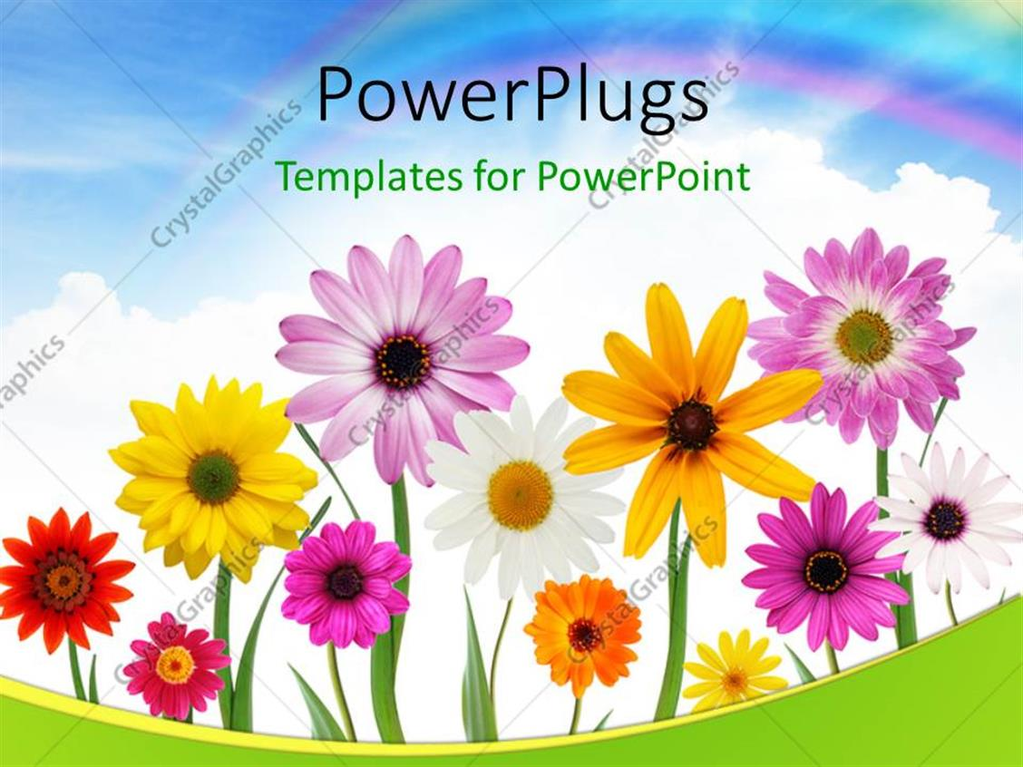 Powerpoint Template Group Of Colorful Summer Daisies And Sunflower