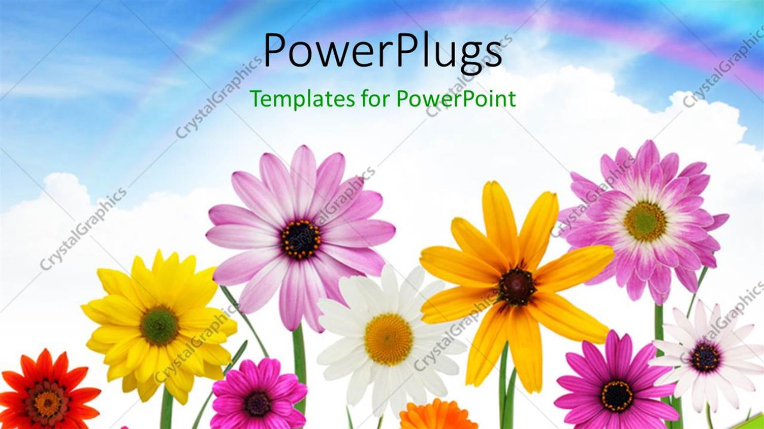 PowerPoint Template Displaying Group of Colorful Summer Daisies and Sunflower with Beautiful Sky in the Background