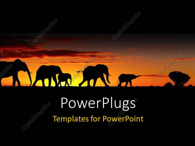 Powerpoint Template A Group Of Elephants With Sunset In The