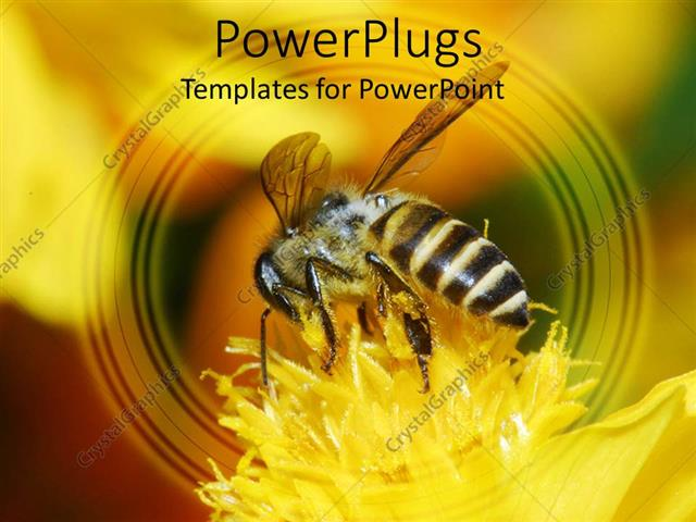 Powerpoint Template A Honey Bee Sucking Nectar From A Yellow Flower