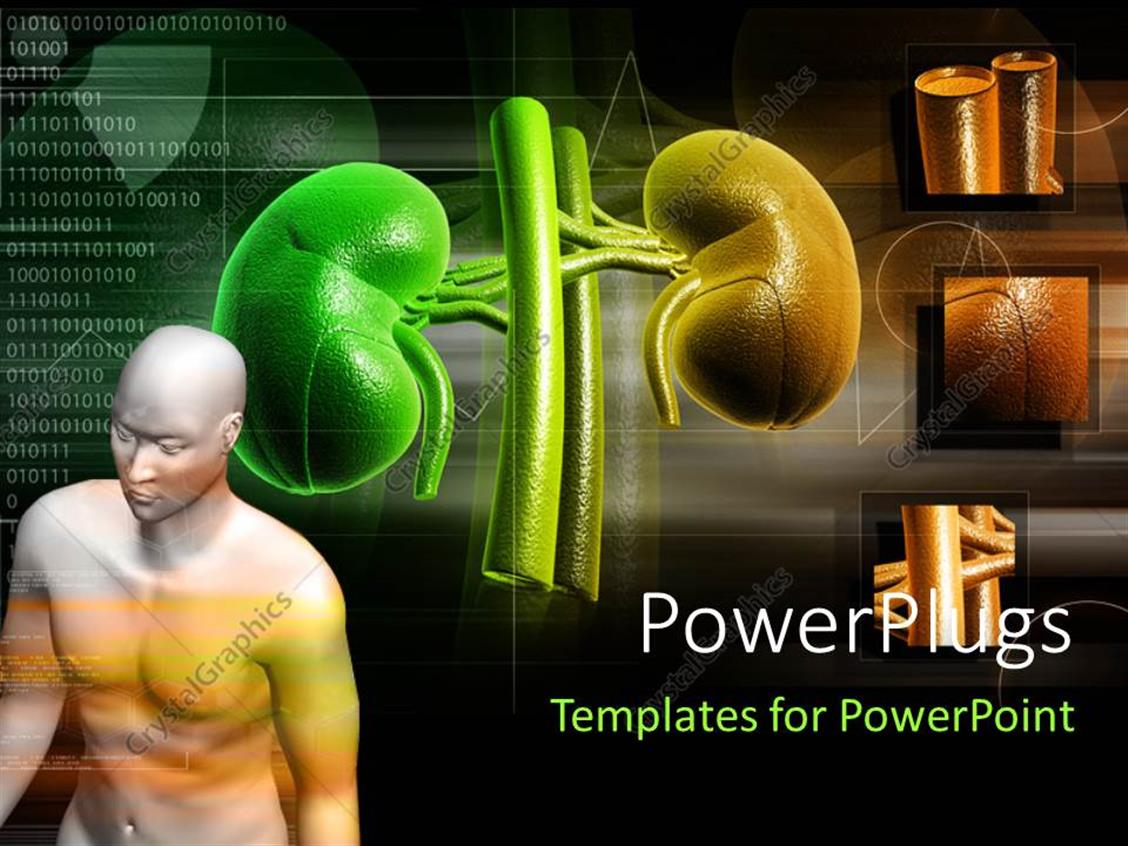 PowerPoint Template: human anatomy with kidney structure in ...