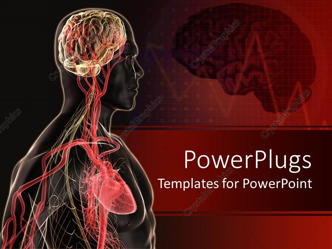 PowerPoint Template: Human body anatomy with brain, blood vessels ...