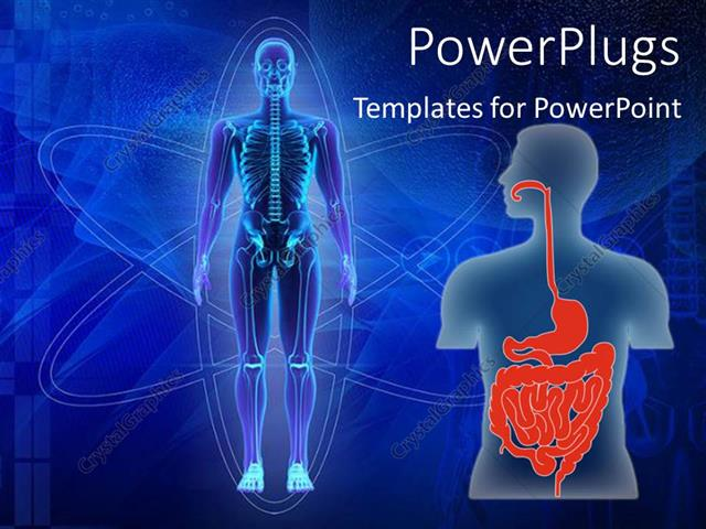 Powerpoint template human body showing skeleton and human torso powerpoint template displaying human body showing skeleton and human torso with digestive tract in red toneelgroepblik Images