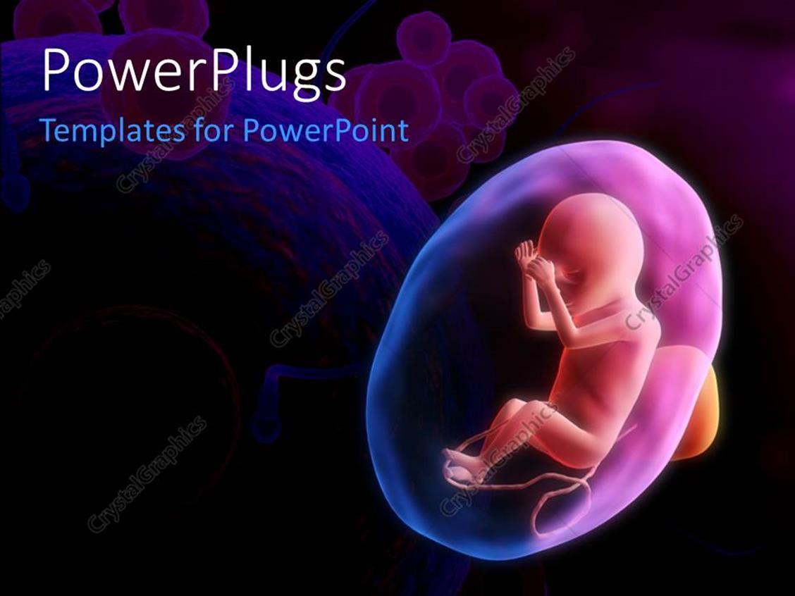 PowerPoint Template Displaying a Human Fetus with Eggs and Sperm
