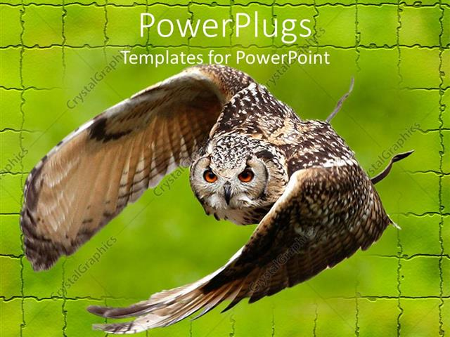 PowerPoint Template: large brown Owl flying off green brick wall (10202)