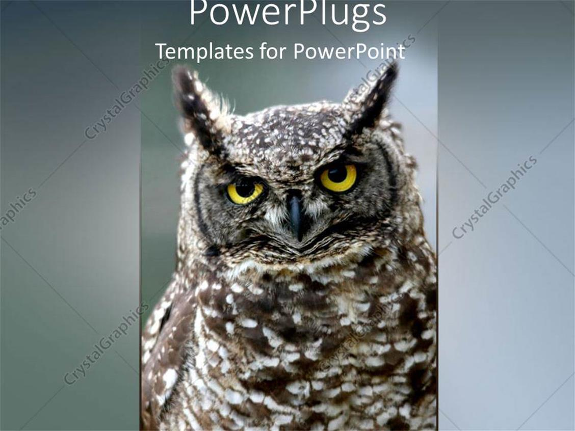 PowerPoint Template: a large brown and white colored owl with ash ...