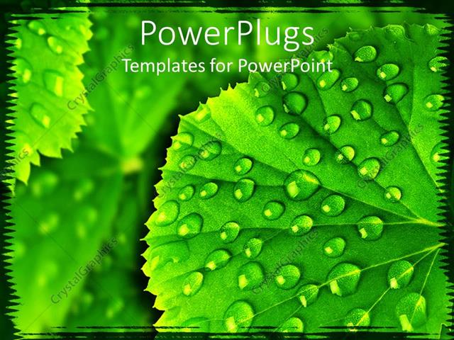 powerpoint template a leaf with water droplets along with its
