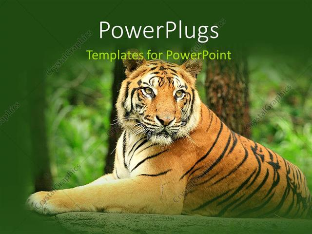 powerpoint template a lion in the jungle with trees in background