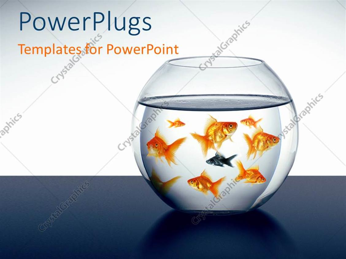 PowerPoint Template Displaying a Lot of Goldfish Swimming in the Aquarium