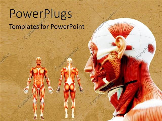 Powerpoint Template Male Muscles On The Human Body In Anatomy On A