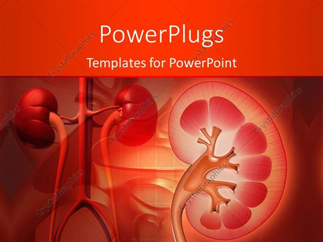 Powerpoint template medical theme with kidney and other human powerpoint template displaying medical theme with kidney and other human organs on red color toneelgroepblik