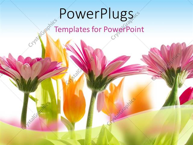 PowerPoint Template: multi color flowers blossom in spring with sky ...
