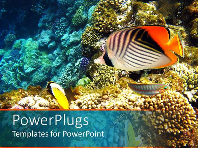 powerpoint template a number of colorful fish with coral reef in