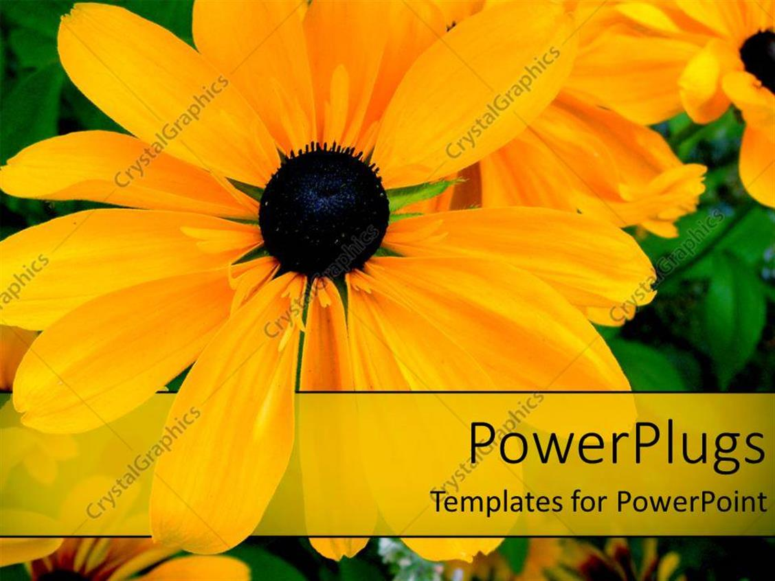 PowerPoint Template Displaying a Number of Flowers with Green Leaves in Background