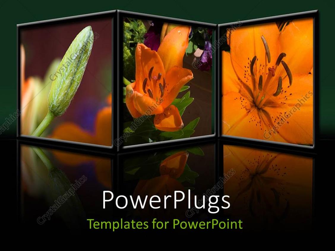 PowerPoint Template Displaying a Number of Pictures of Flowers