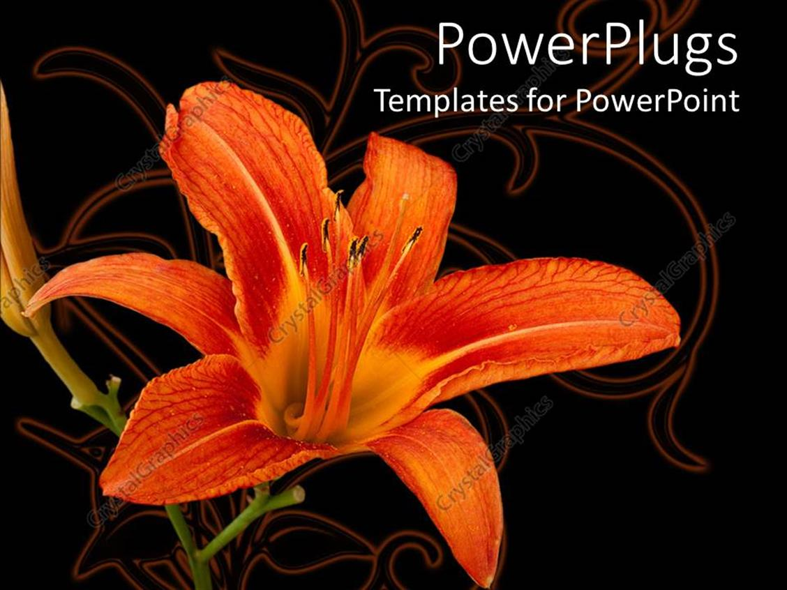 Powerpoint Template Orange Lily Flower On Abstract Design And Dark