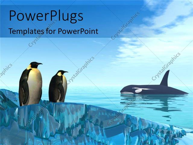 Powerpoint Template A Pair Of Penguins Together With Shark In The
