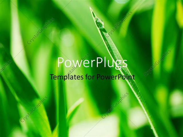 PowerPoint Template Displaying a Plant with a Water Droplet and Greenery in the Background