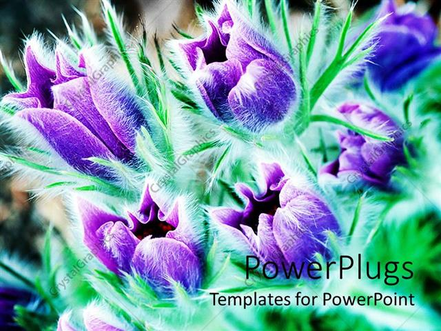 PowerPoint Template Displaying Purple Flowers with Greenery in the Background