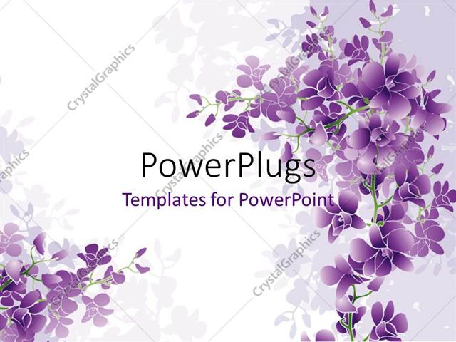Powerpoint Template Purple Orchids Blossom With White Color 12481