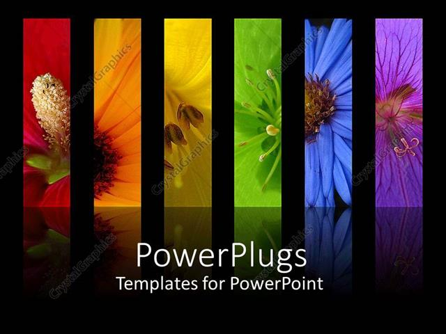PowerPoint Template Displaying Rainbow of Flowers Collage Including Red Orange Yellow Green Blue and Purple