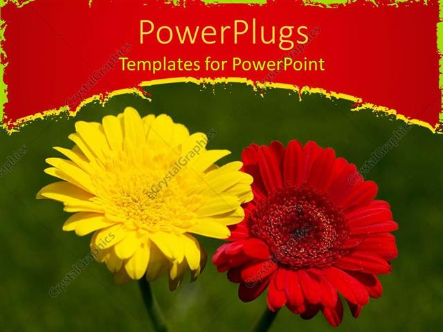PowerPoint Template Displaying a Red and Yellow Flower with Green Background