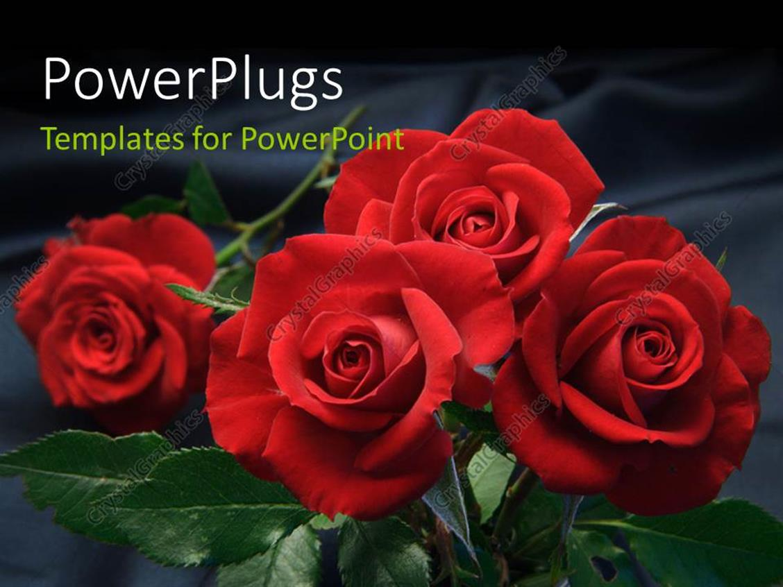 PowerPoint Template Displaying Reflection of Red Flourishing Roses on Background
