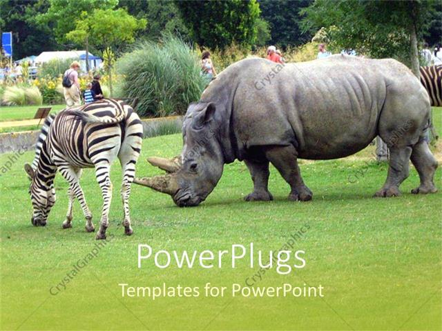 Powerpoint template a rhino along with a zebra 1762 powerpoint template displaying a rhino along with a zebra toneelgroepblik Image collections