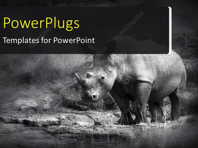 powerpoint template a rhinoceros with jungle in the background and