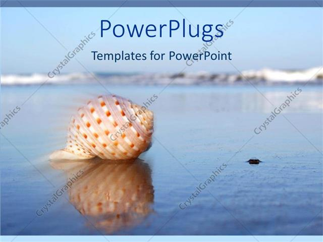 PowerPoint Template Displaying Seashell on Water with Reflection in Sea