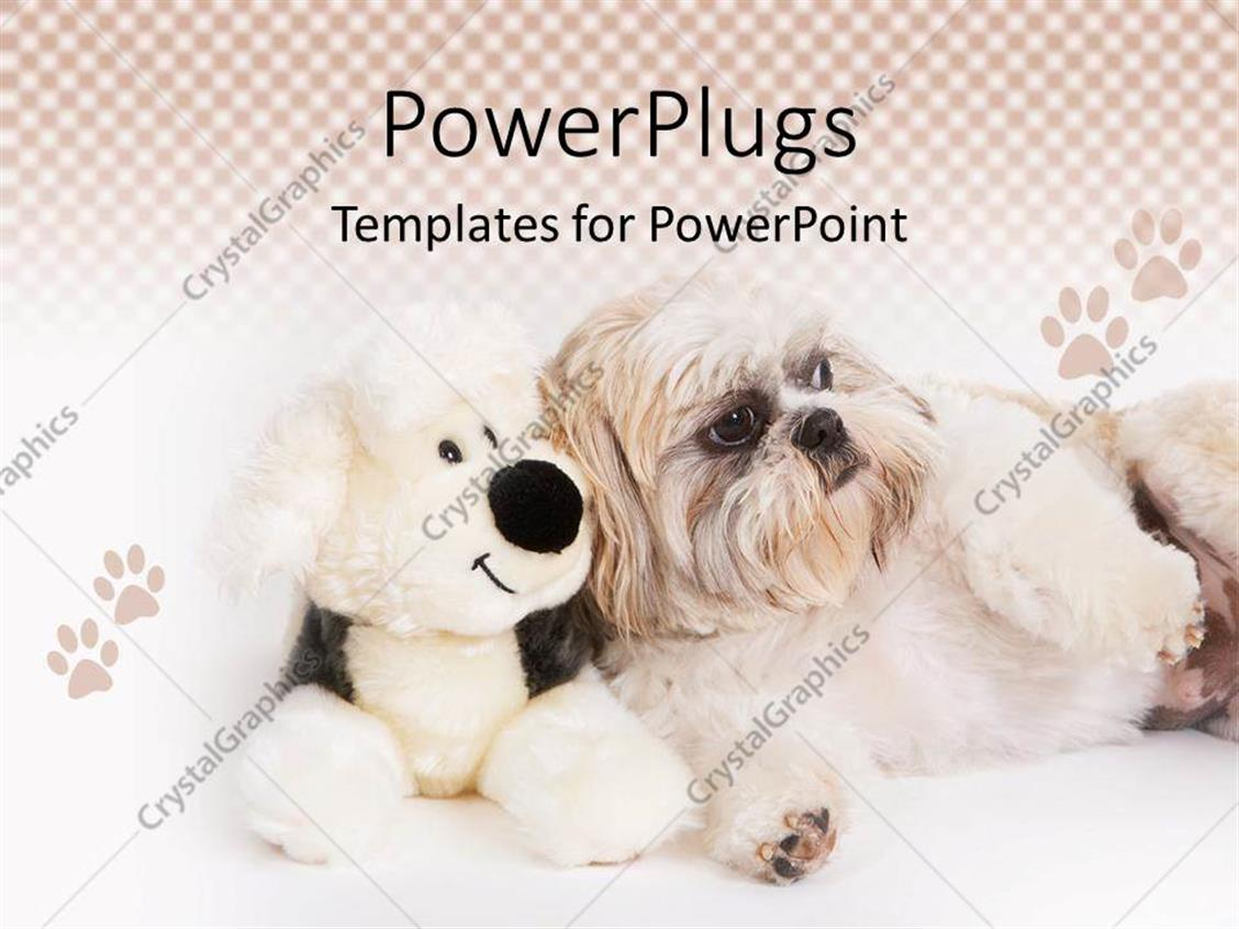 Powerpoint Template Shih Tzu Dog Sitting Next To A Stuffed Dog
