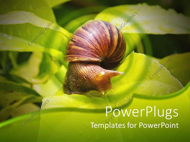 powerpoint template a snail n a leaf with a number of leaves in the