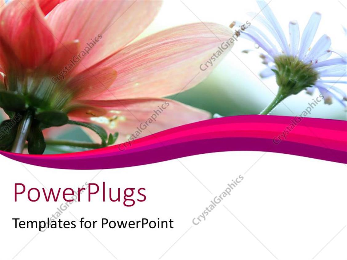 Powerpoint template soft floral shot with nice beautiful flowers in powerpoint template displaying soft floral shot with nice beautiful flowers in white and pink with curves izmirmasajfo