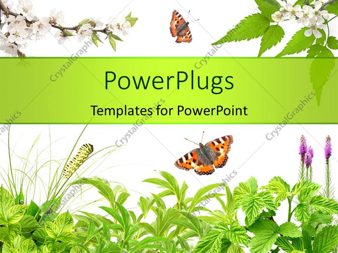 Powerpoint Template Summer Frame With Green Leaves Flowers And