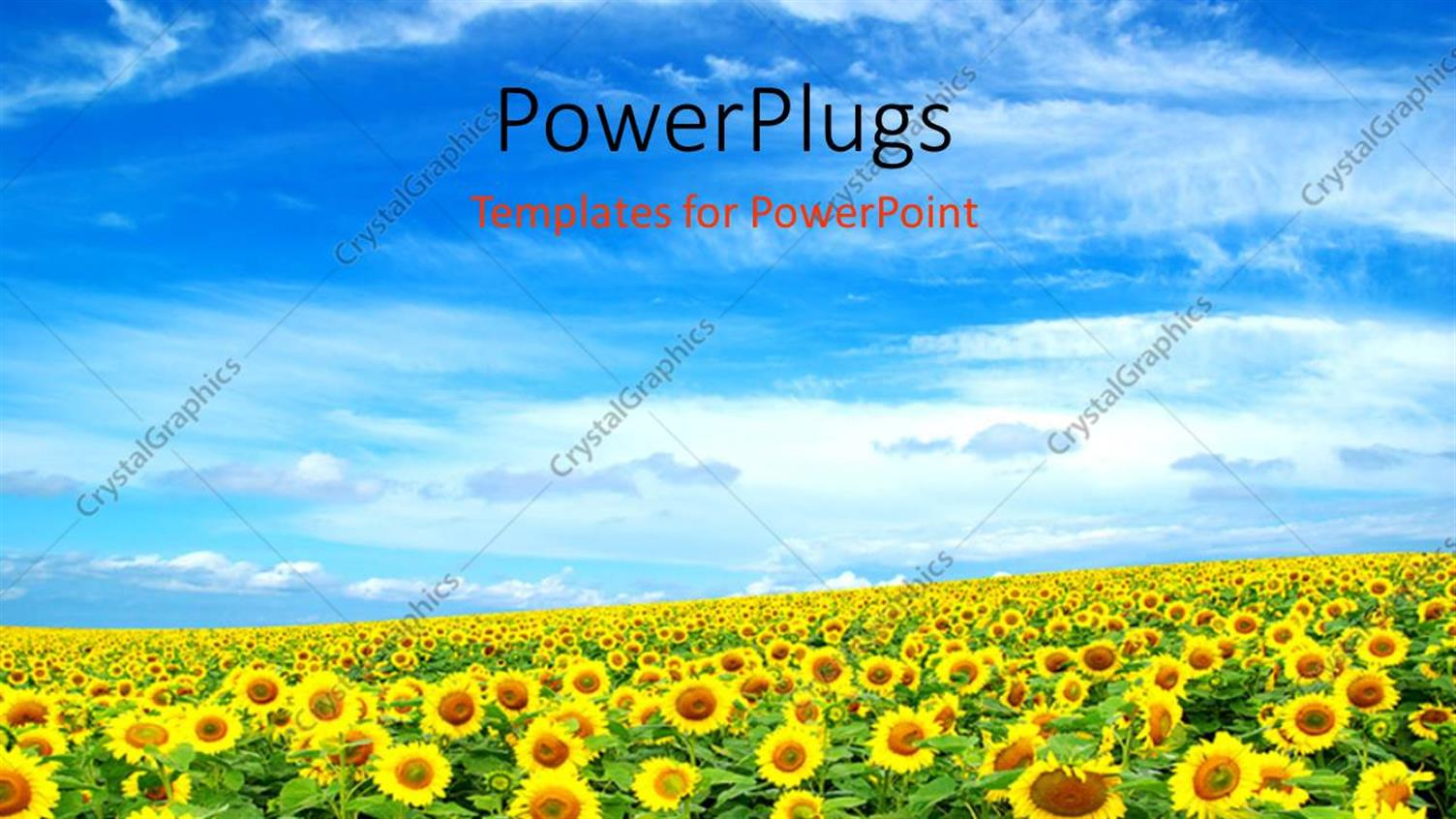 PowerPoint Template Displaying a Sunflower Farm with Clouds in the Blue Sky