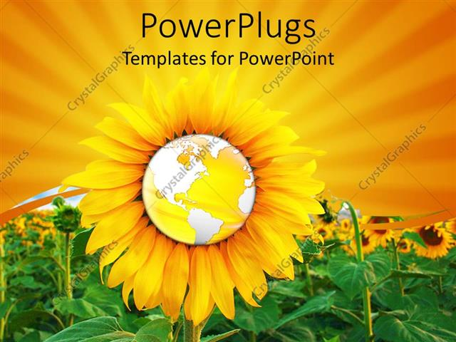 PowerPoint Template Displaying a Sunflower with the Globe in the Middle and a Lot of Sunflowers in the Background